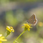 Un papillon sur la balade de la petite ceinture à Paris